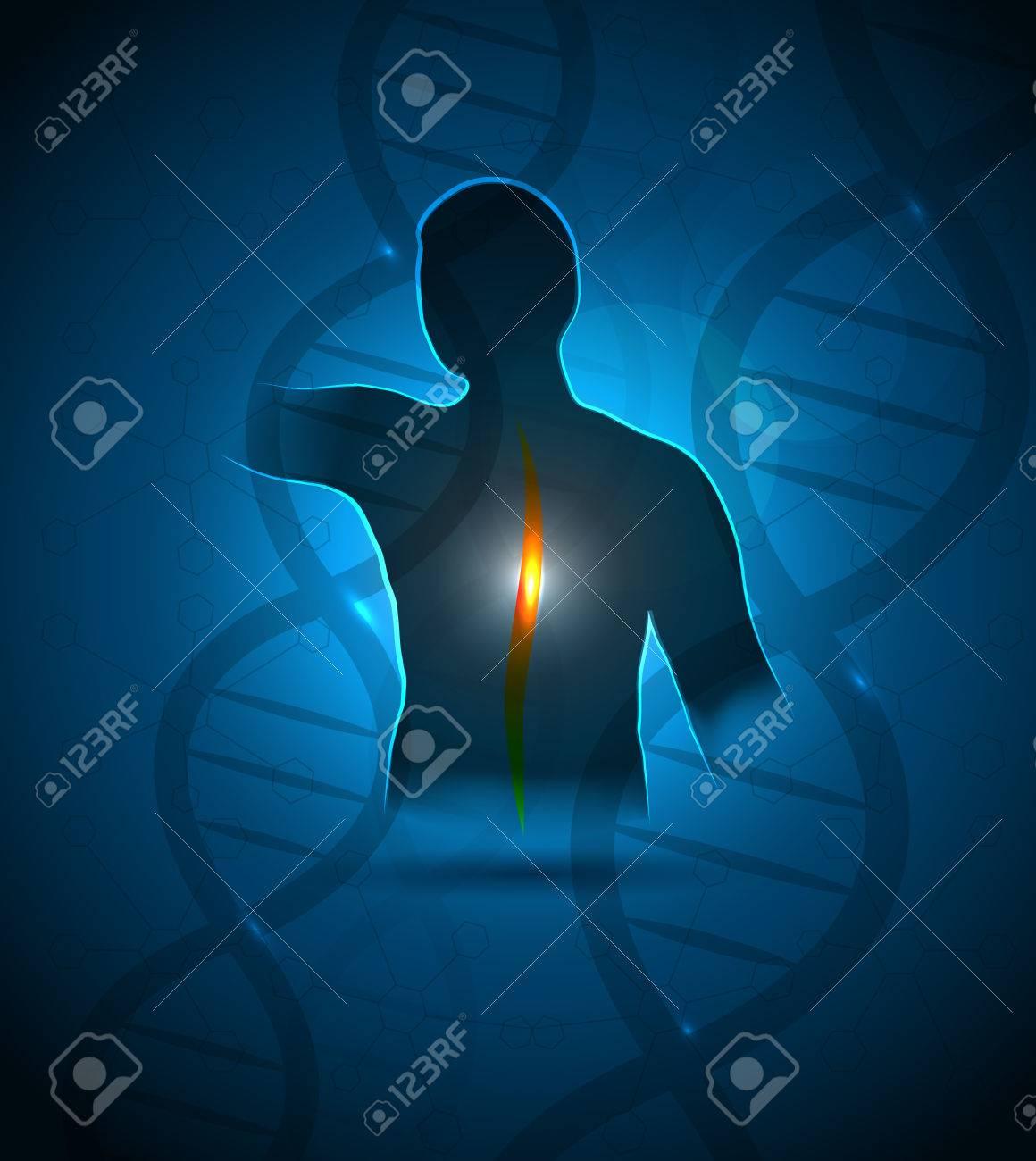 Espalda Humana, La Columna Vertebral Y El Diseño Cuidado De La Salud ...