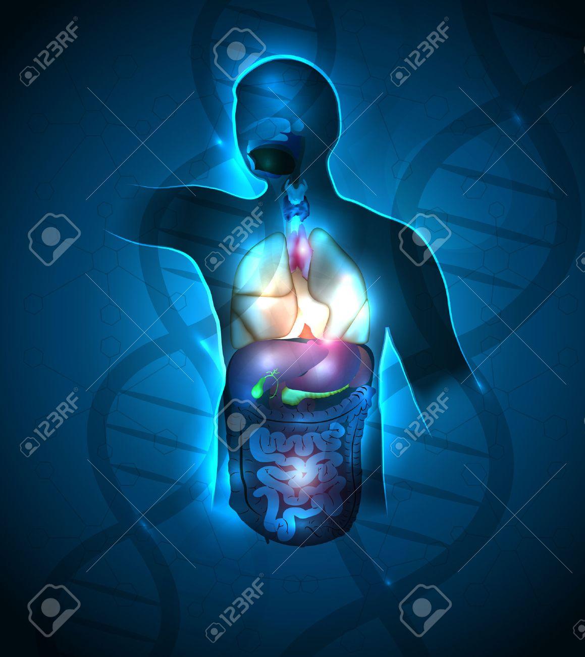 Diseño Abstracto Anatomía Humana, La Cadena De ADN En El Fondo ...