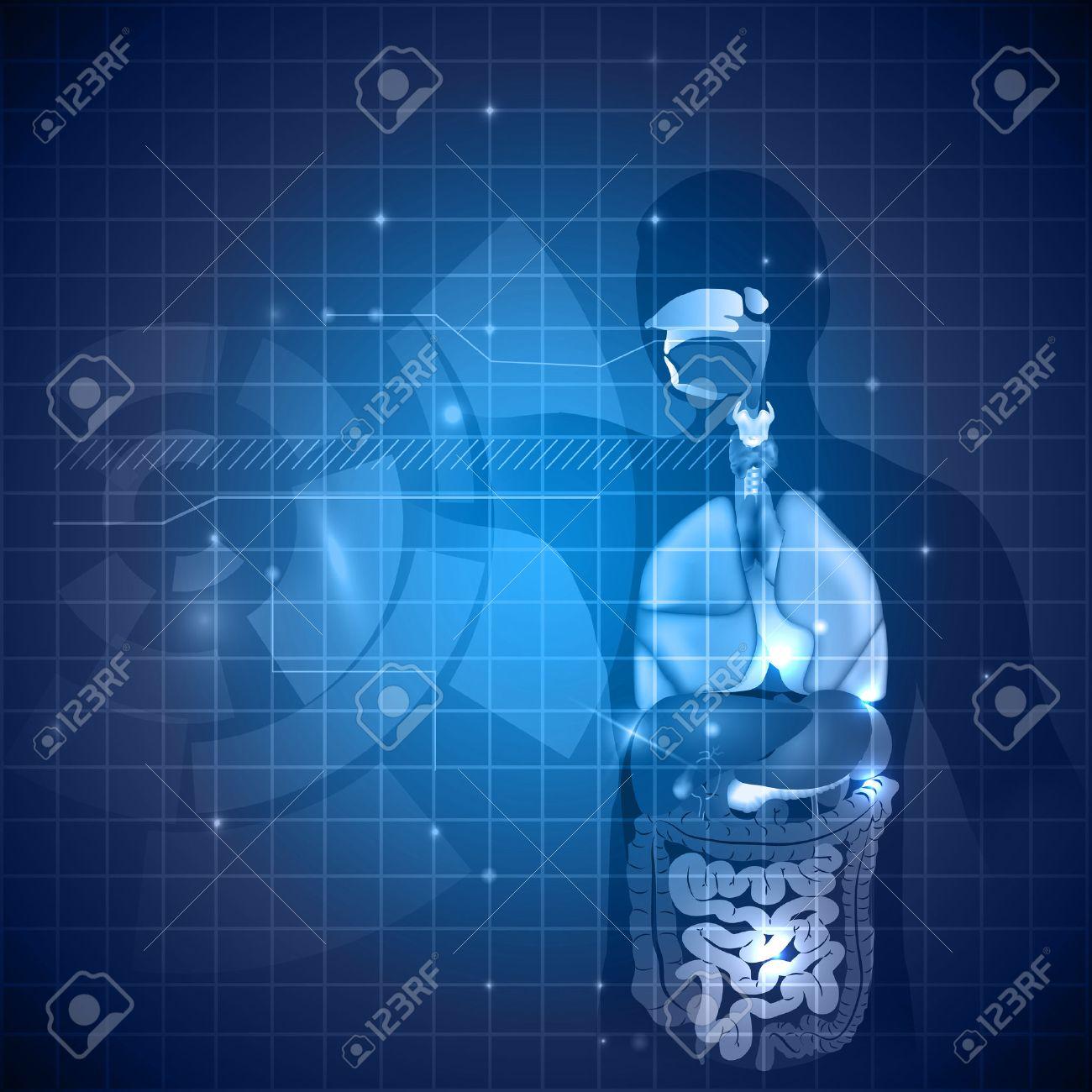 Fondo La Anatomía Humana, Varios órganos Internos, De Color Azul ...