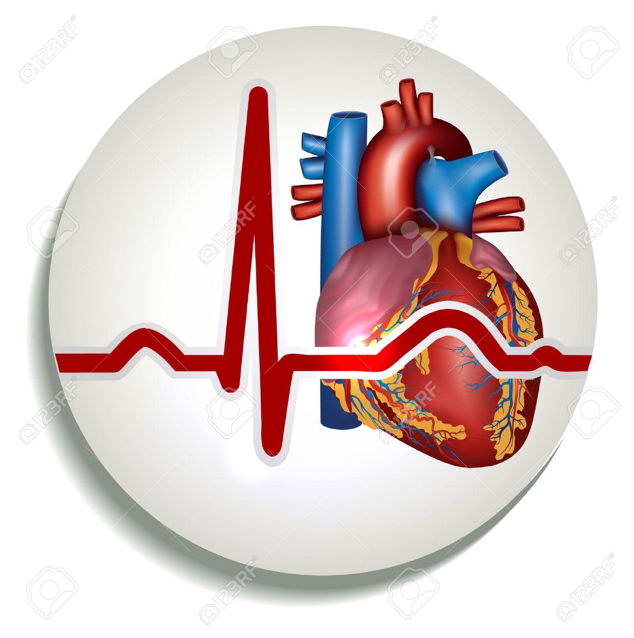 Colorful Human Heart Rhythm Icon. Human Heart Anatomy And Normal ...