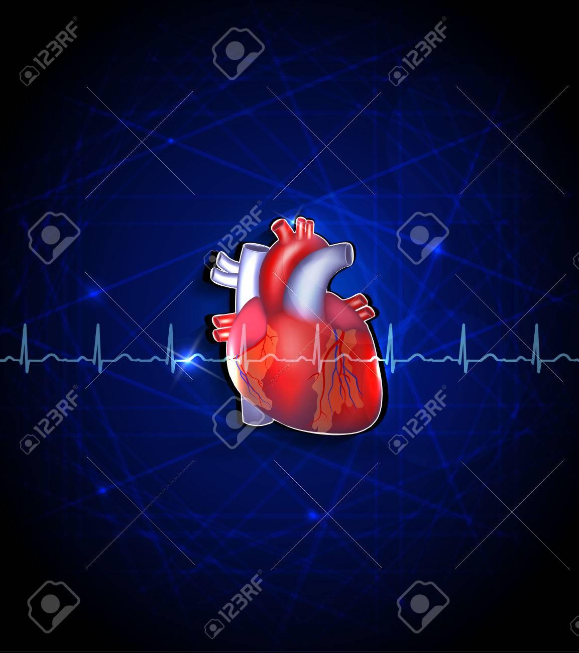 Anatomía Del Corazón Sobre Un Fondo Azul Profundo Ilustraciones ...