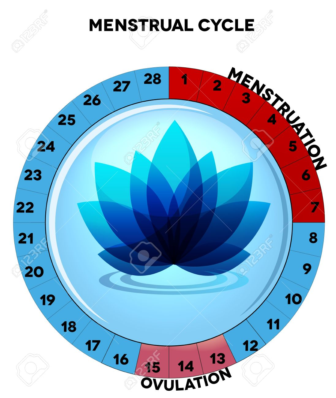 menstrual cycle chart, average twenty eight menstrual cycle days