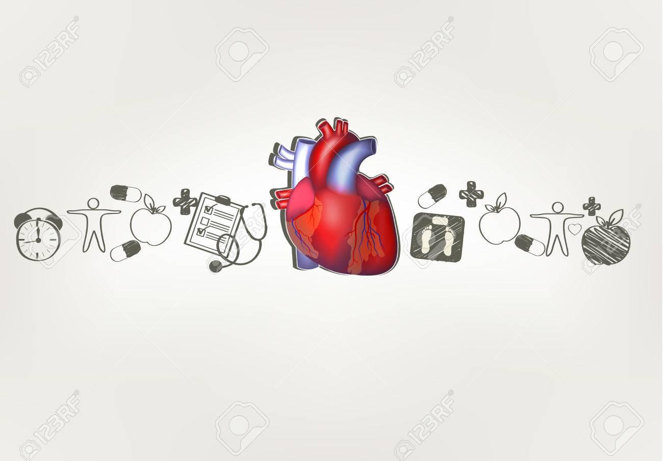 Anatomía Del Corazón Con La Mano Dibujada Consejos Para El Cuidado ...