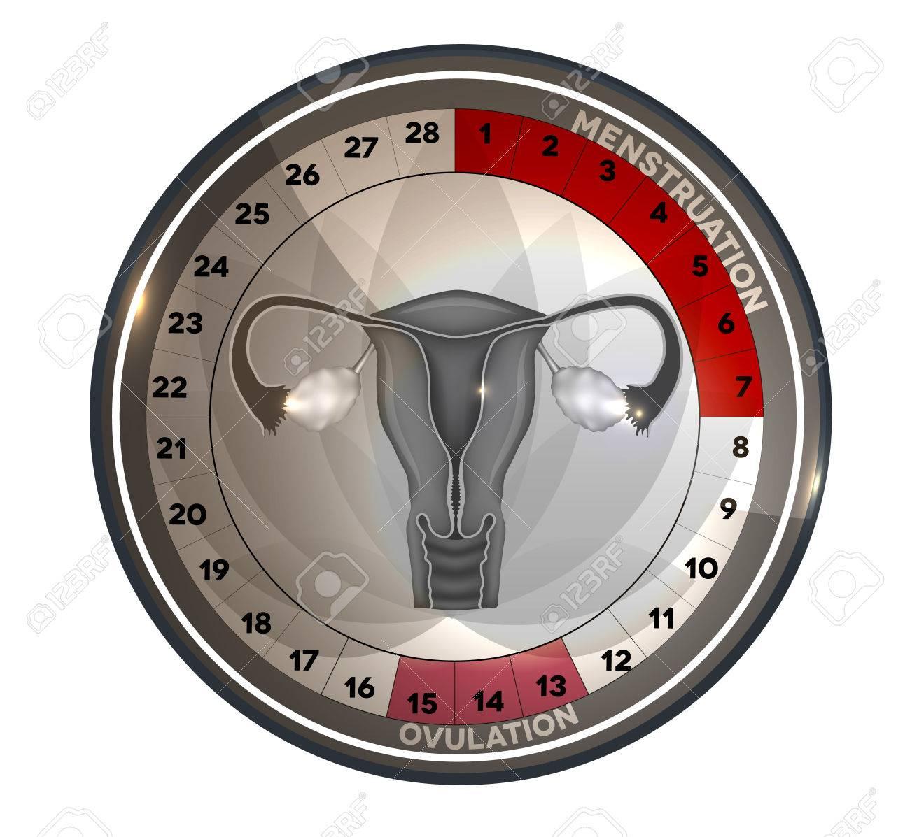 Calendario Del Ciclo Menstrual, Los Días De La Menstruación Y La ...