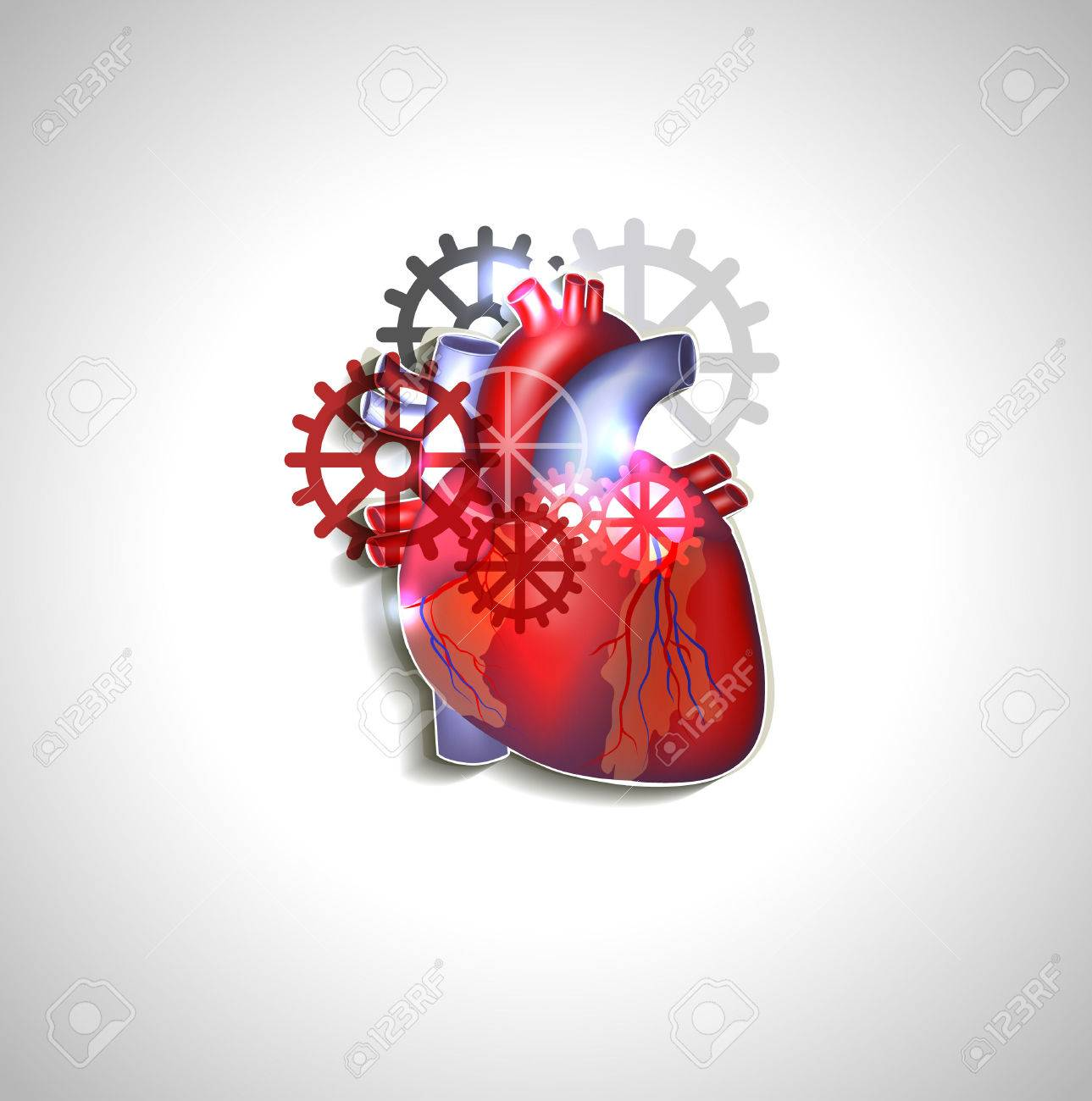 Heart With Gears, Human Heart Anatomy Royalty Free Cliparts, Vectors ...