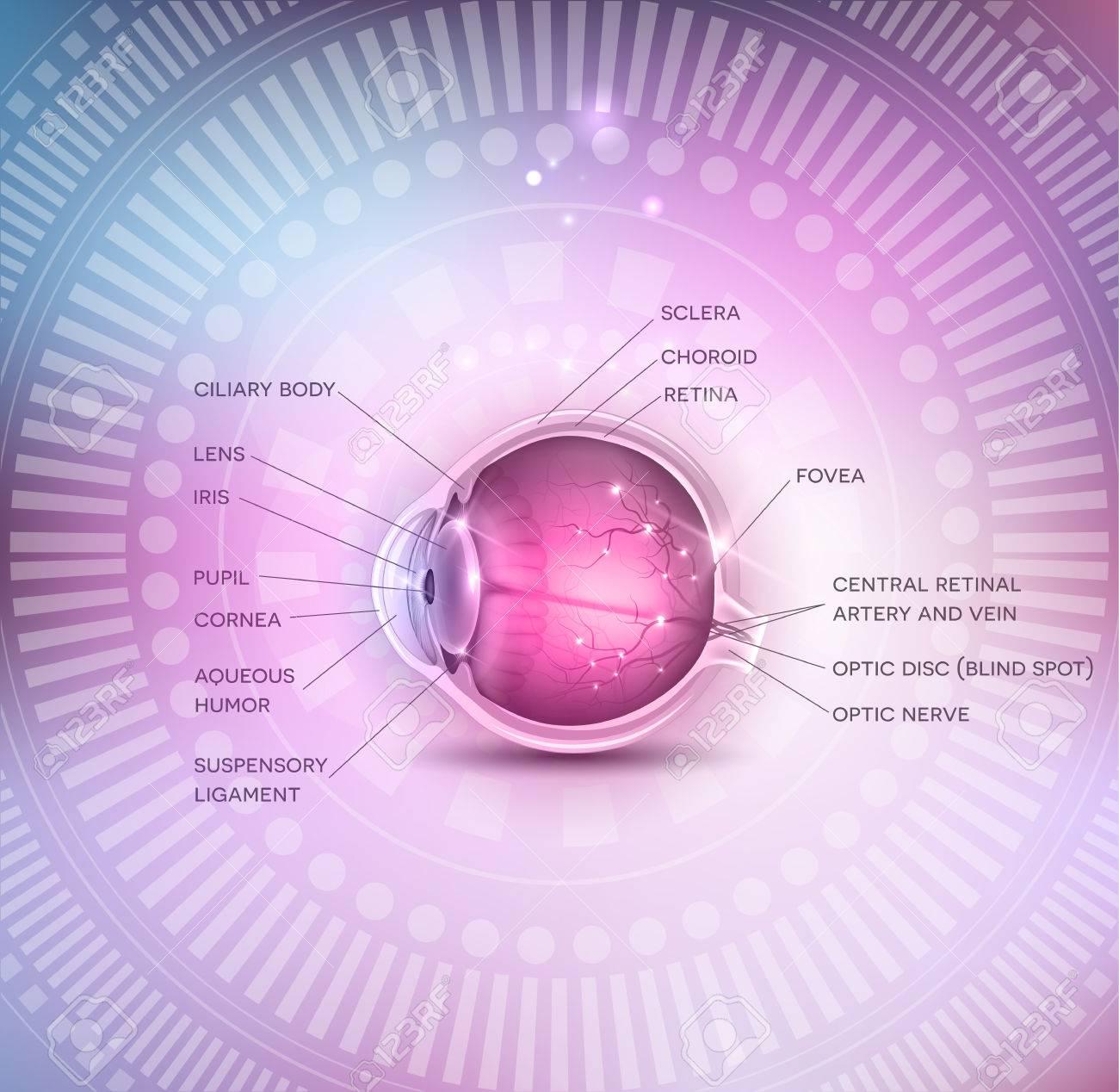 La Anatomía Normal Del Ojo En Un Fondo Hermoso Colorido De Malla ...