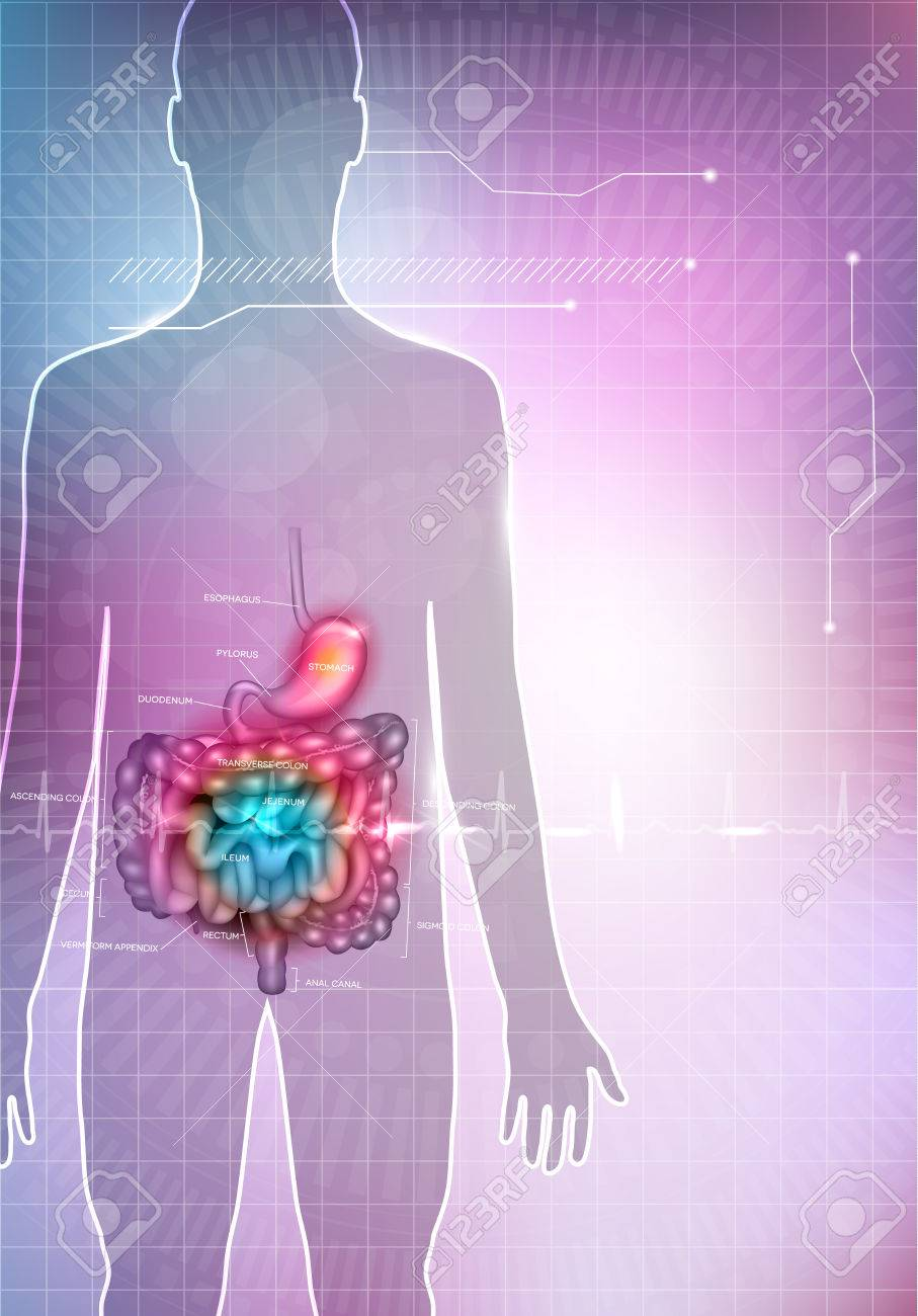 Gastrointestinal Tract Anatomy Abstract Colorful Mesh Background ...