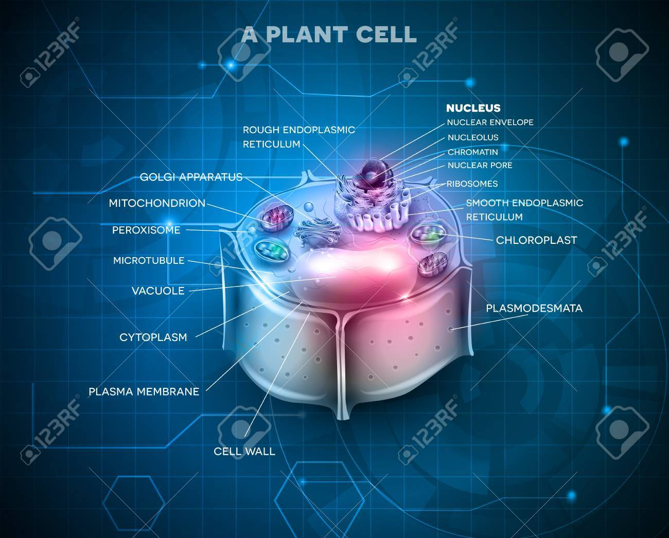 Plant Cell Anatomy Scientific Background Royalty Free Cliparts