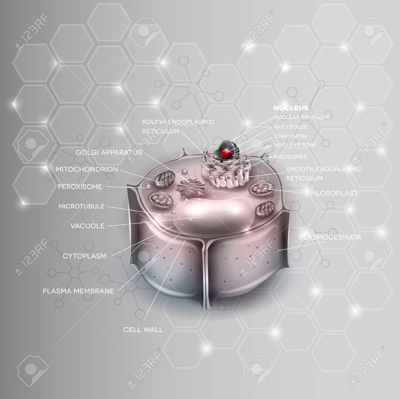 La Estructura De La Célula De La Planta La Sección Transversal De La Anatomía Se Detalla Celular En Un Fondo Científica