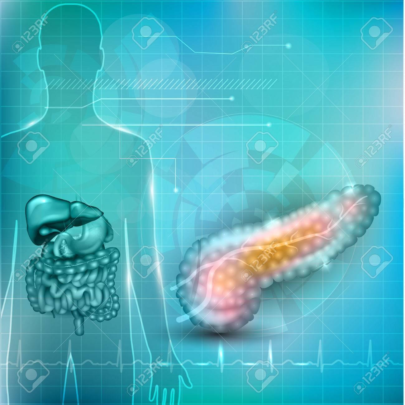 Anatomía Páncreas Y El Concepto De Tratamiento, La Silueta Humana ...