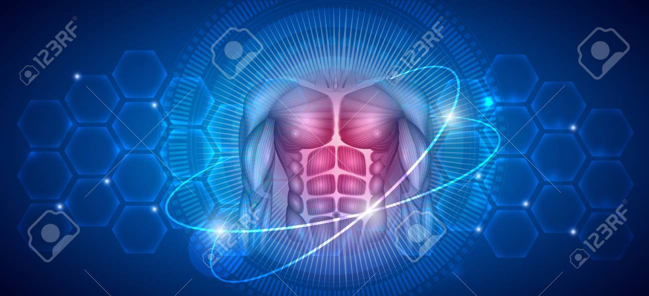 Human body Muscles, healthy lifestyle and fitness abstract scientific background - 125473516