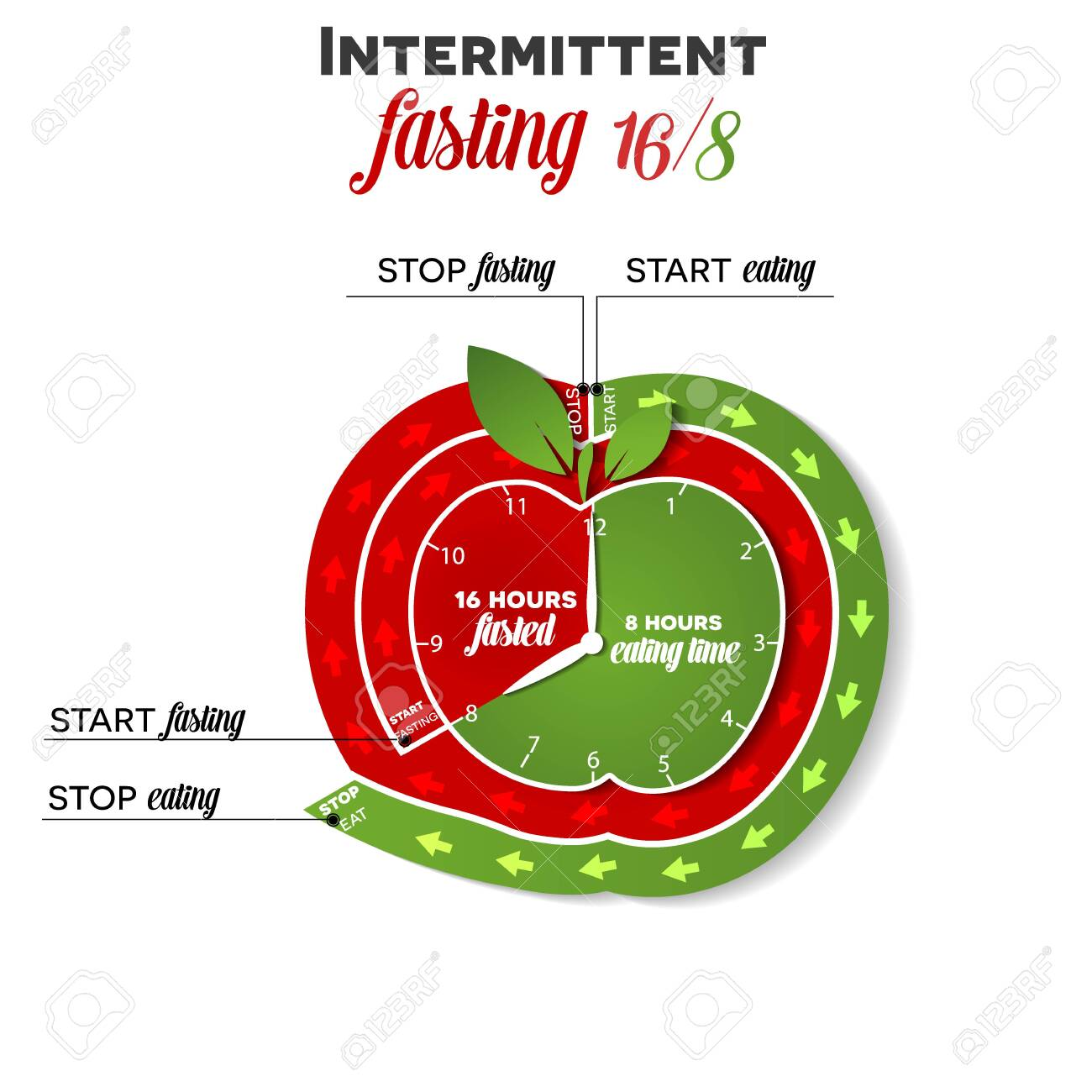 Intermittent Fasting Apple Shape Clock 16 8 For Weight Loss And Royalty Free Cliparts Vectors And Stock Illustration Image 139943812