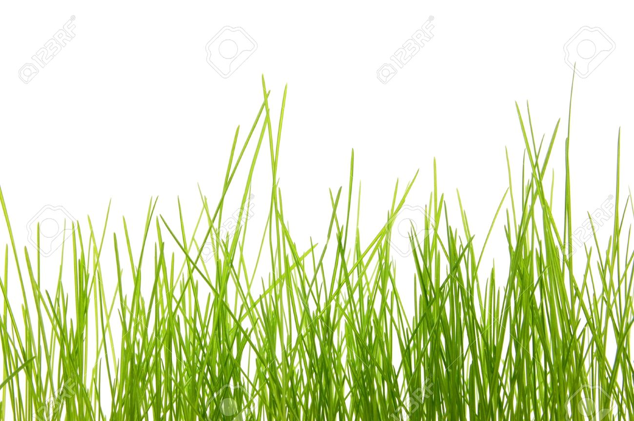 green summer grass isolated on white background Stock Photo - 4186626