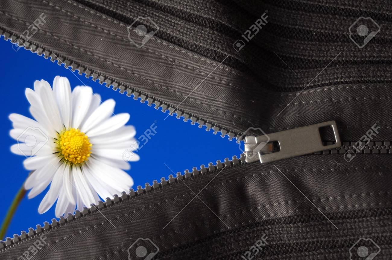 flower hidden behind a zip showing summer concept Stock Photo - 6480788