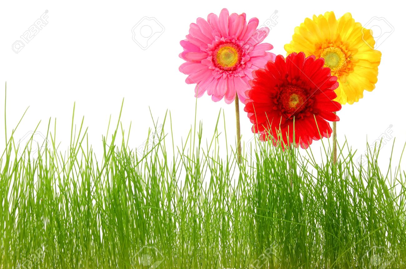 Summer Flowers And Grass Isolated On White Background Stock Photo