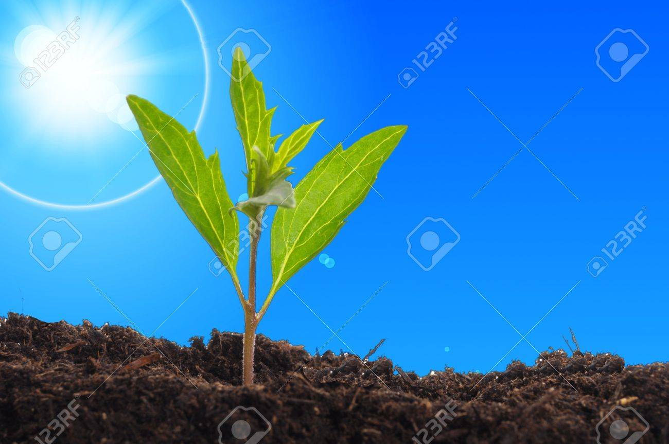 young plant showing ecology growth or nature concept with copyspace Stock Photo - 7534323