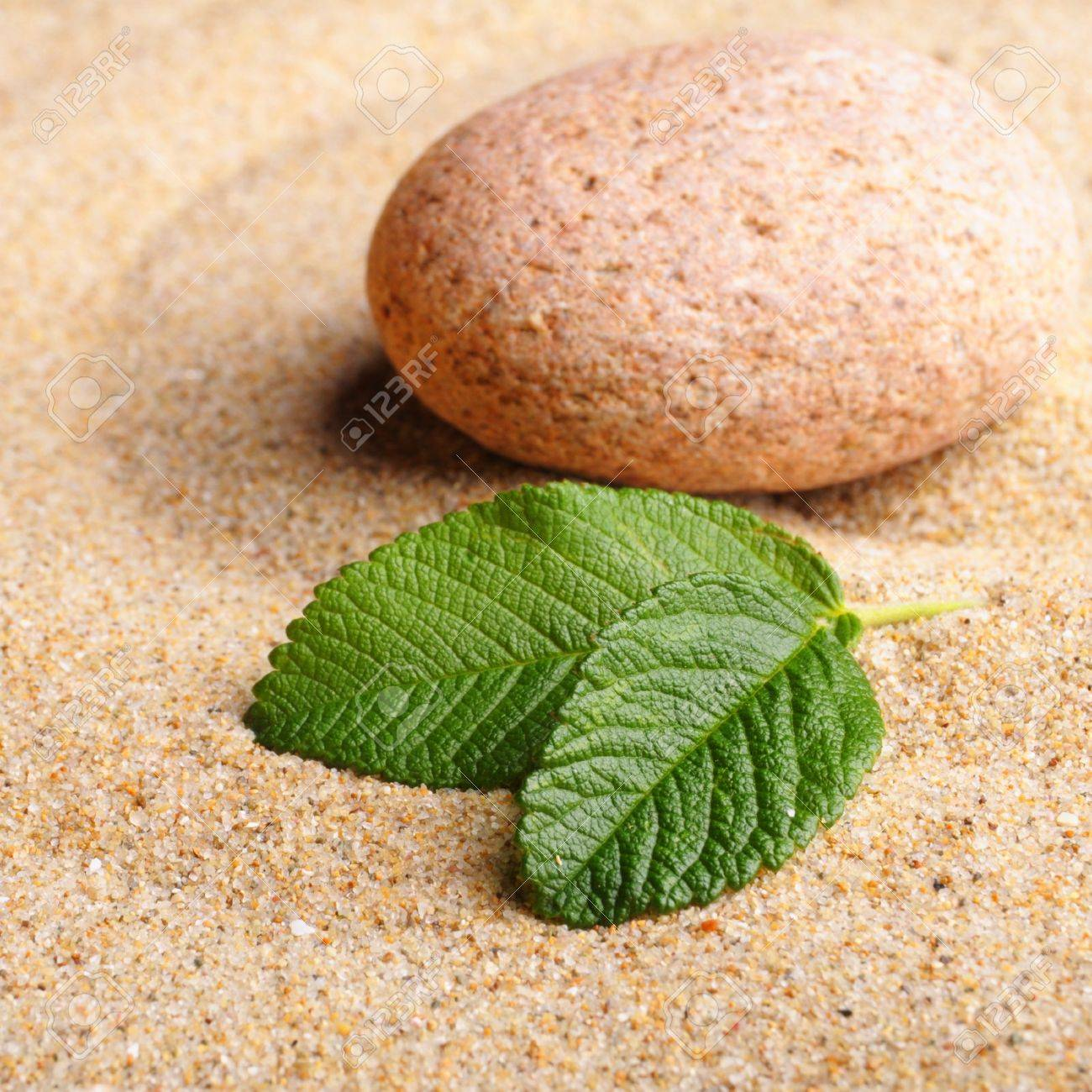 zen garden with stone or pebble on sand with leaf Stock Photo - 7723708
