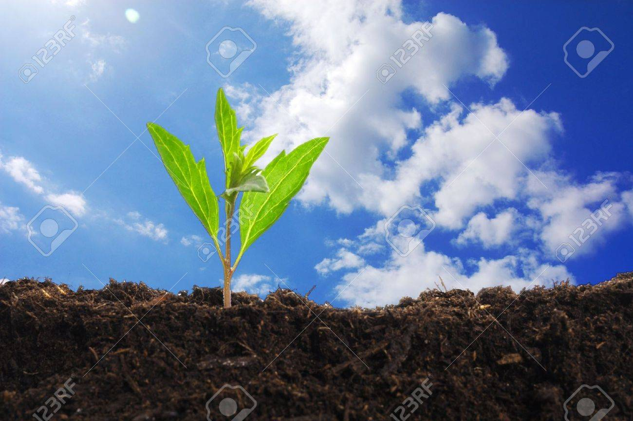 growth concept with growing young plant in nature Stock Photo - 7880621