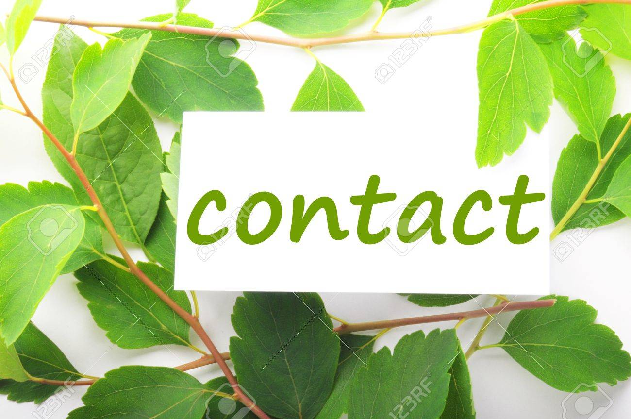 contact us concept with word on nature still life Stock Photo - 7974133