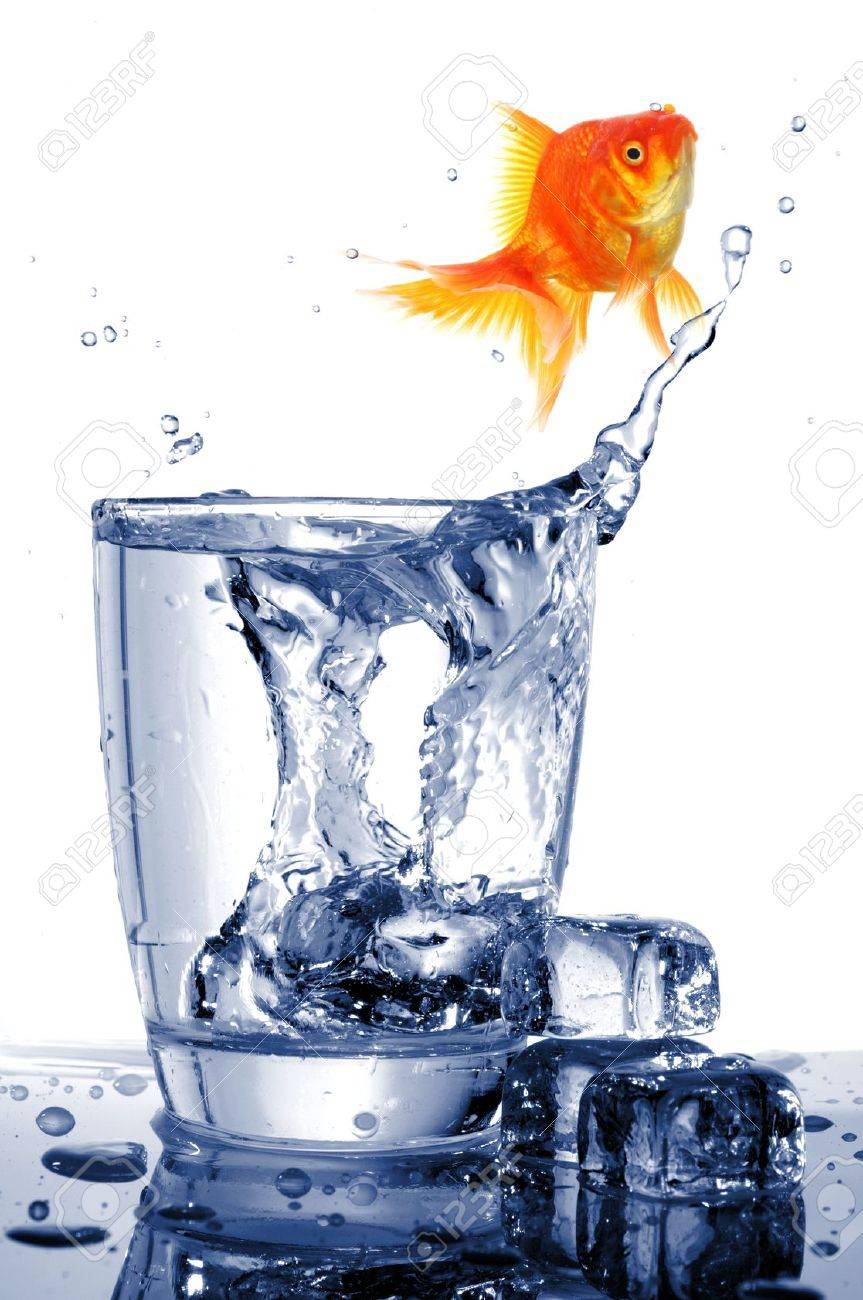 goldfish in drink glass showing jail prison free or freedom concept Stock Photo - 7994519