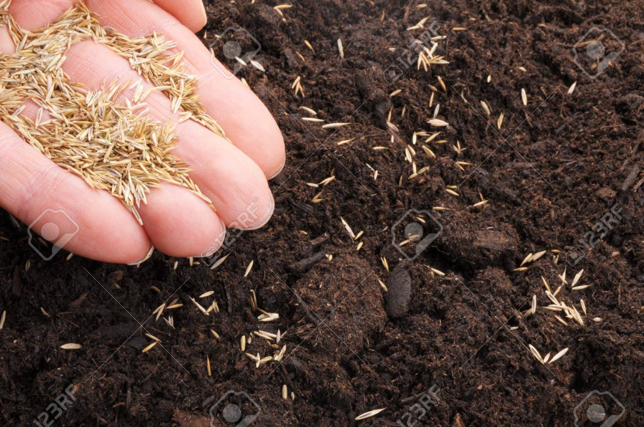 sowing hand and soil showing growth or agriculture concept Stock Photo - 8046399