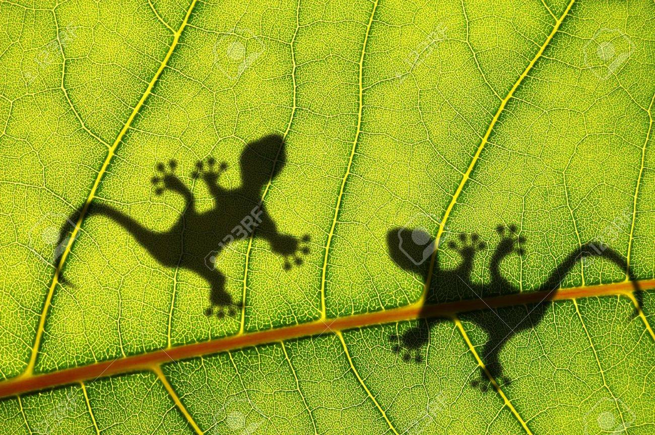 green jungle leaf with gecko shadow showing rainforest or nature concept Stock Photo - 8183340
