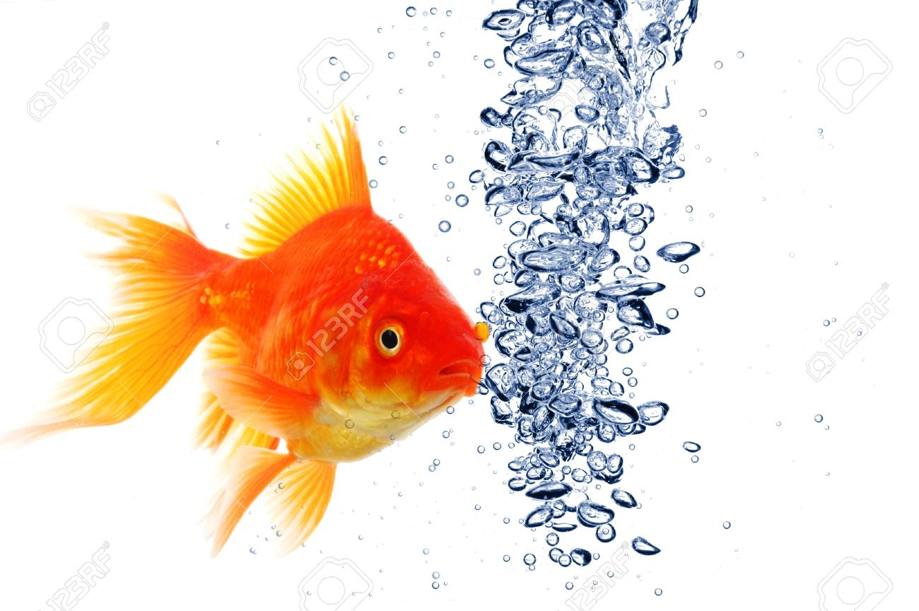 goldfish under water with bubbles and copyspace on white Stock Photo - 8423920