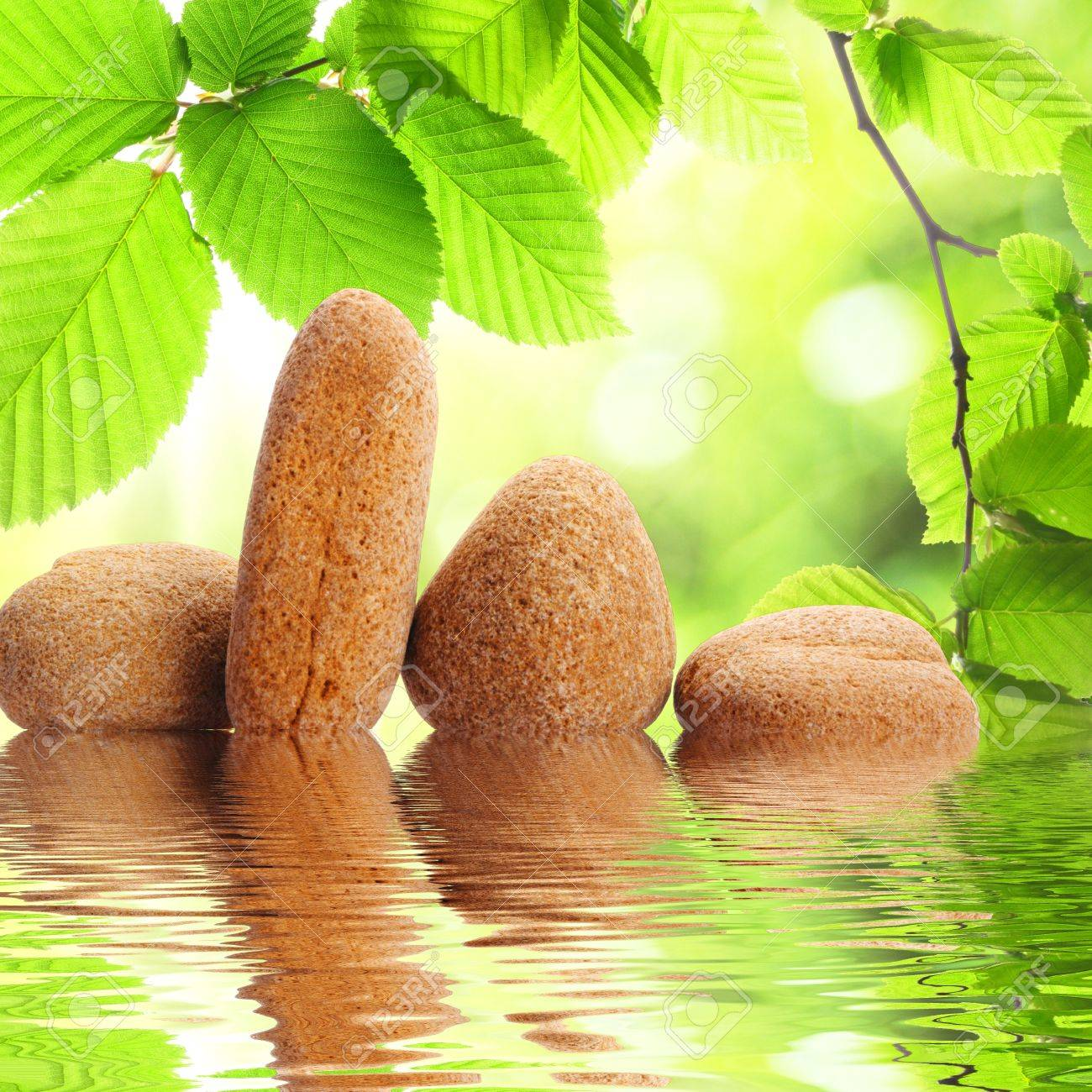 zen stones and green summer leaves with water reflection Stock Photo - 8424022