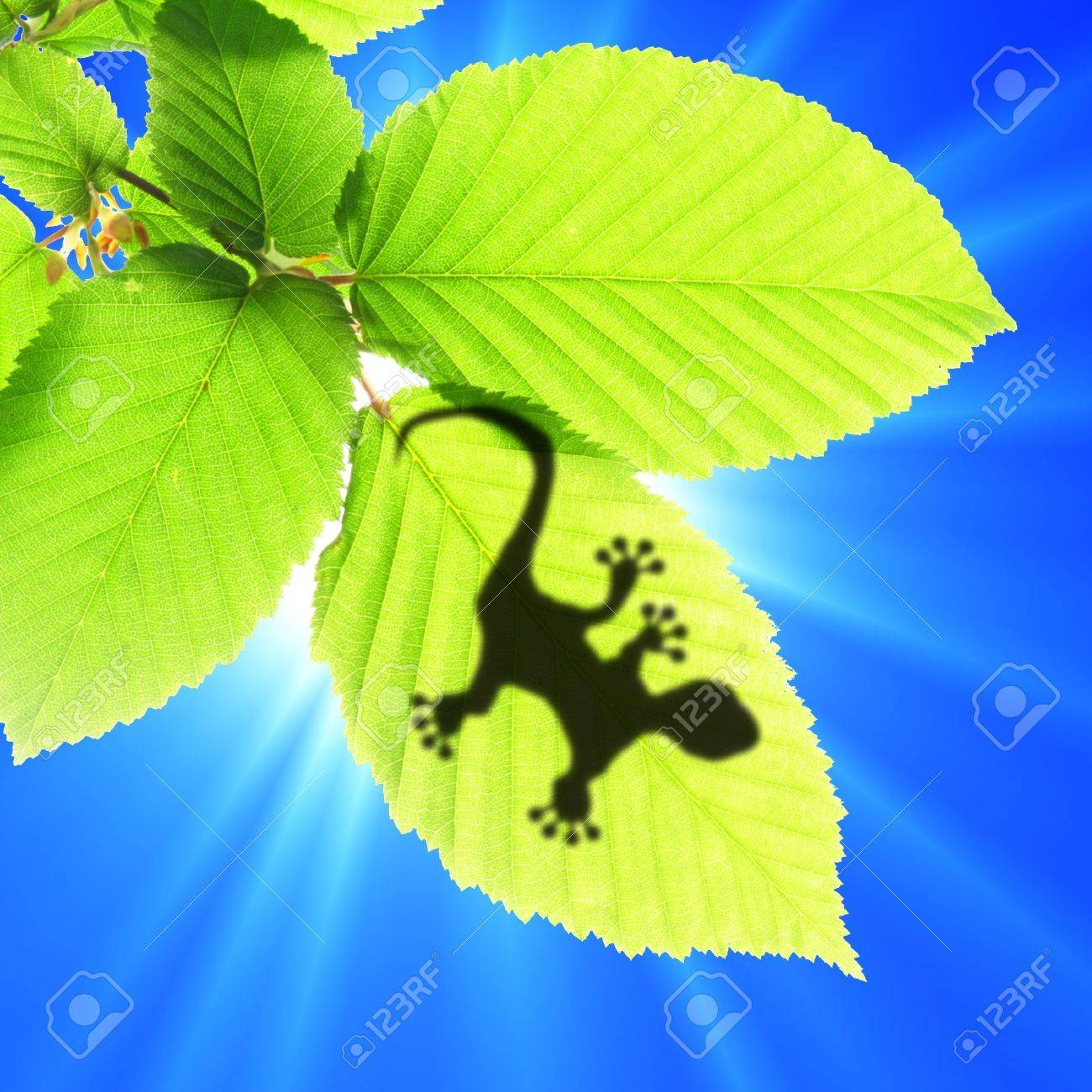 tropical background with leaf and gecko or lizard animal stock
