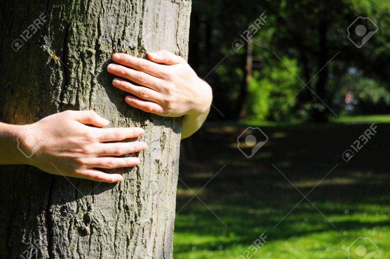 embracing a tree with hands shwing nature ecoecology or environmental concept Stock Photo - 8840856