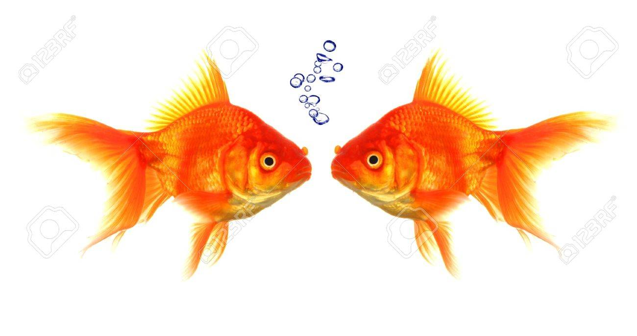 goldfish with bubbles showing discussion talk or conversation concept - 9104422
