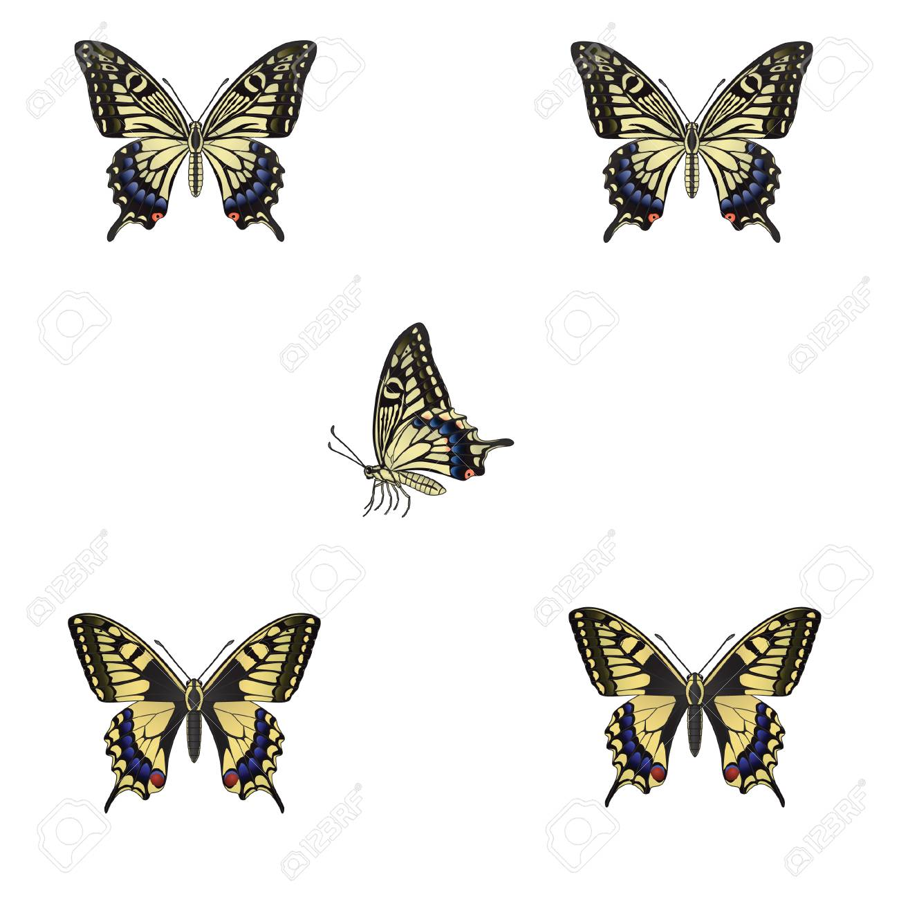 The butterfly on a white background. Vector illustration Stock Vector - 4821805