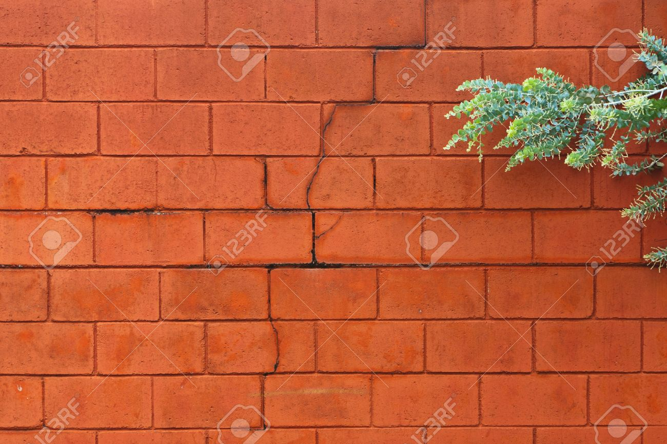 Painted cinder block wall texture - Cracked Painted Cinder Block Wall With A Tree Branch On The Right Side Of The Frame