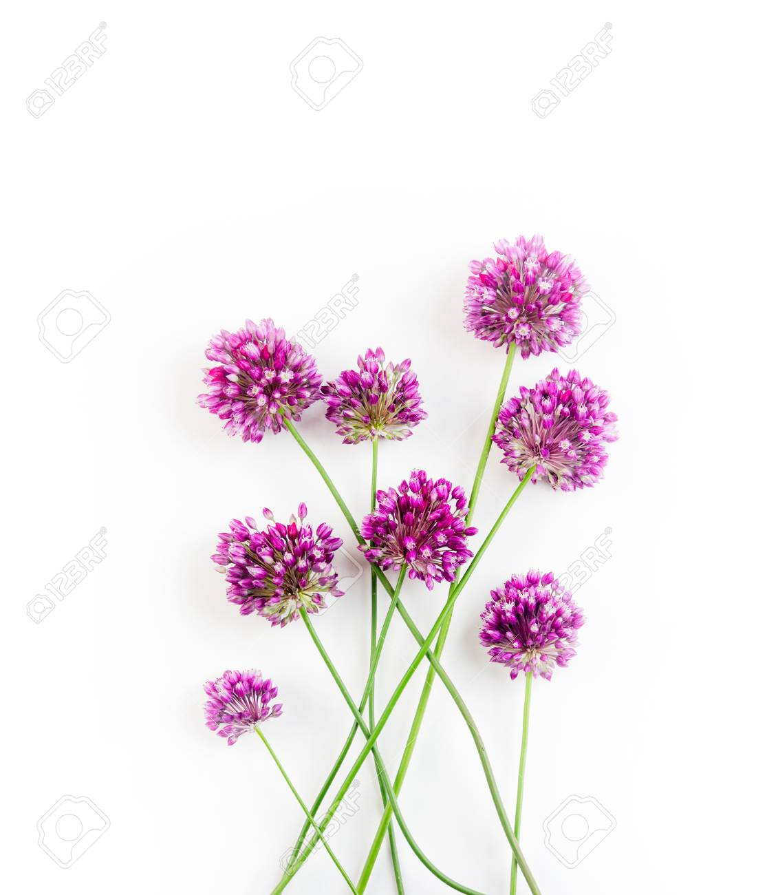 The Flowers Of Allium Against A White Background Stock Photo