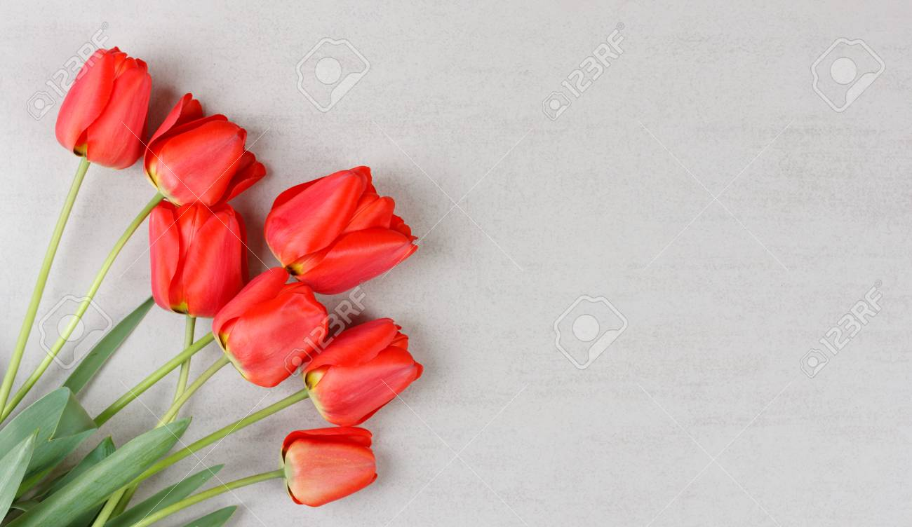 Bouquet Of Red Tulips On Grey Background With Copy Space Mock Up For Birthday Greetings