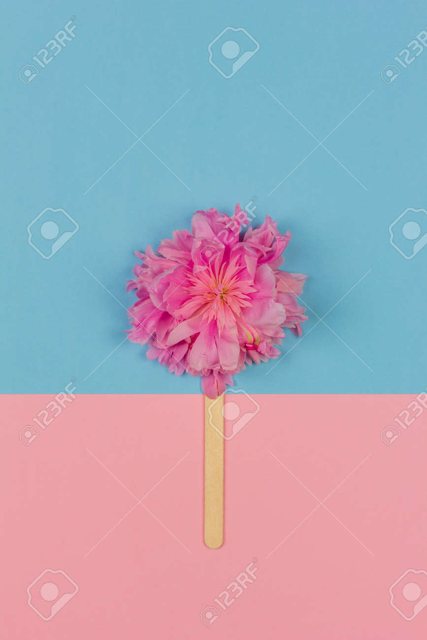 abstract ice cream of pink peony flower on wooden ice cream stick on pink blue background top view flat lay - 169308578