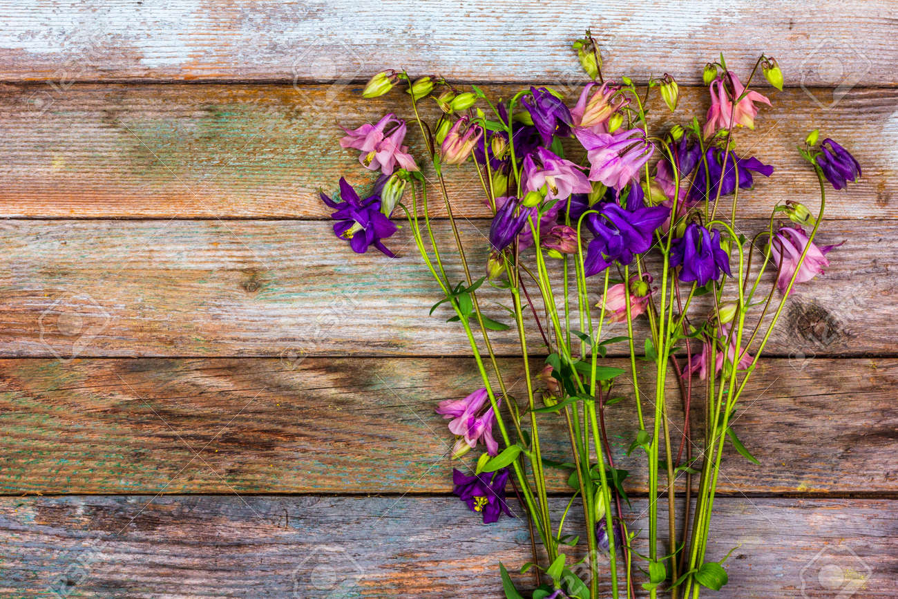 bouquet of pink and blue aquilegia flowers on a retro wooden background with a copy space top view - 169308583