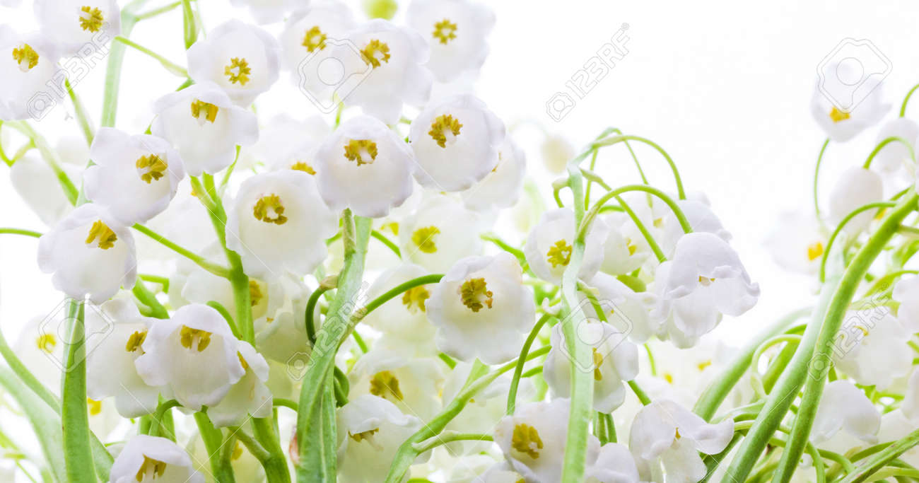 Lily of the valley flowers close up - 169308560