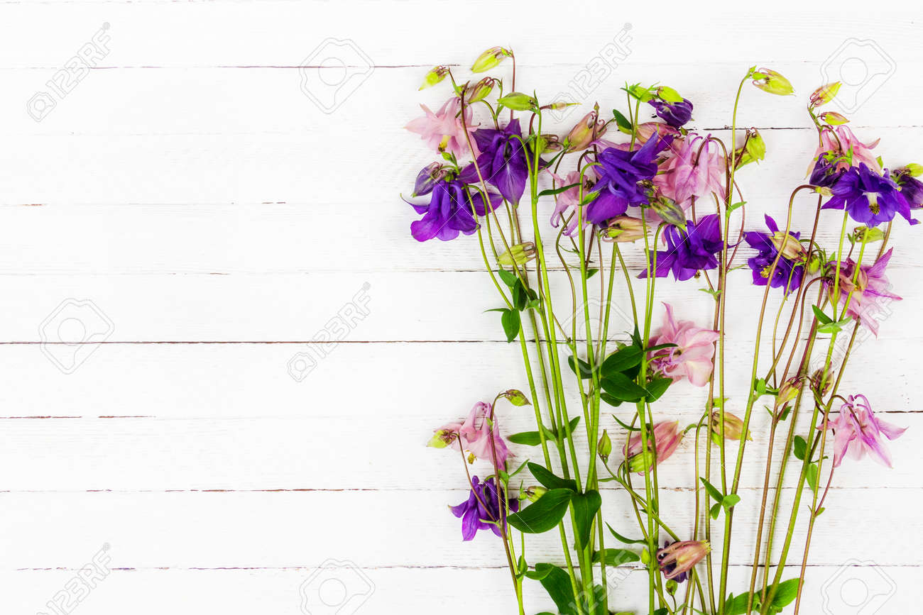 white wooden table with pink and blue aquilegia flowers with copy space top view - 169308566