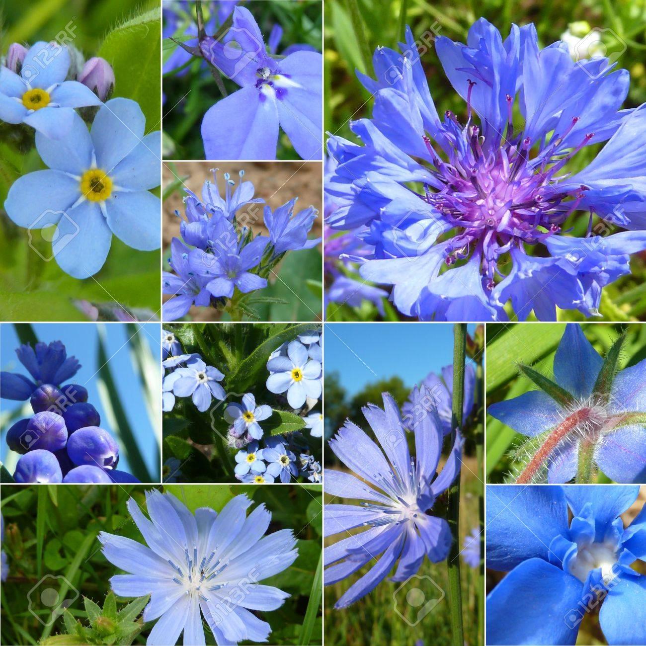 Beautiful blue flowers in germany stock photo picture and royalty beautiful blue flowers in germany stock photo 11322777 izmirmasajfo