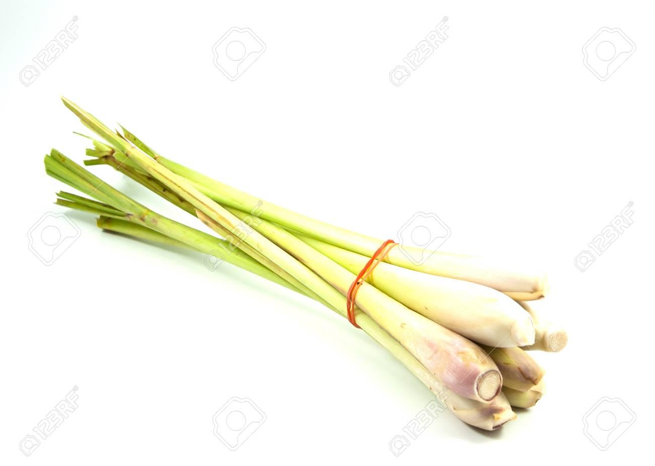 Citronella è una pianta aroma Archivio Fotografico - 18912632