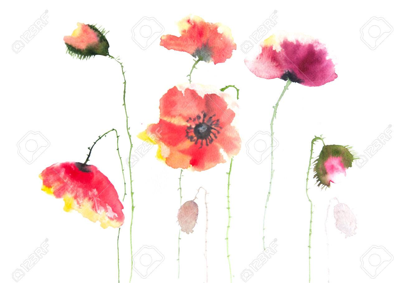 Beautiful Poppy Flowers Watercolor Painting Stock Photo Picture And