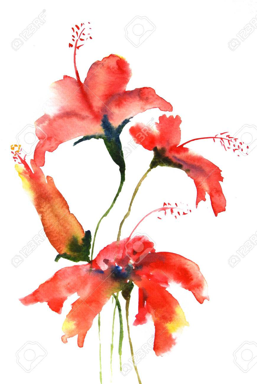 Red Hibiscus Flowers Watercolor Painting Stock Photo Picture And