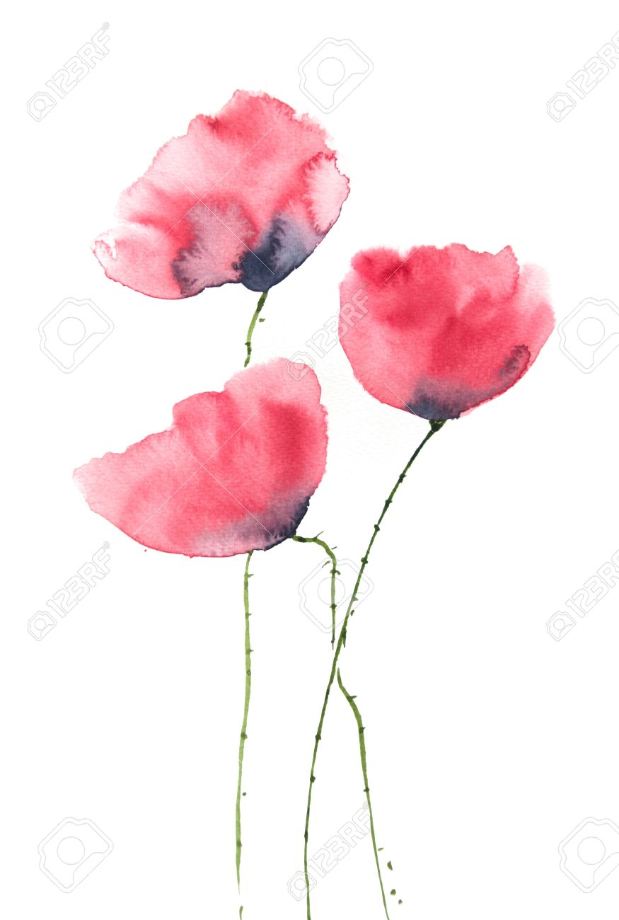 Beautiful red poppy flower watercolor painting stock photo picture beautiful red poppy flower watercolor painting stock photo 47850820 mightylinksfo