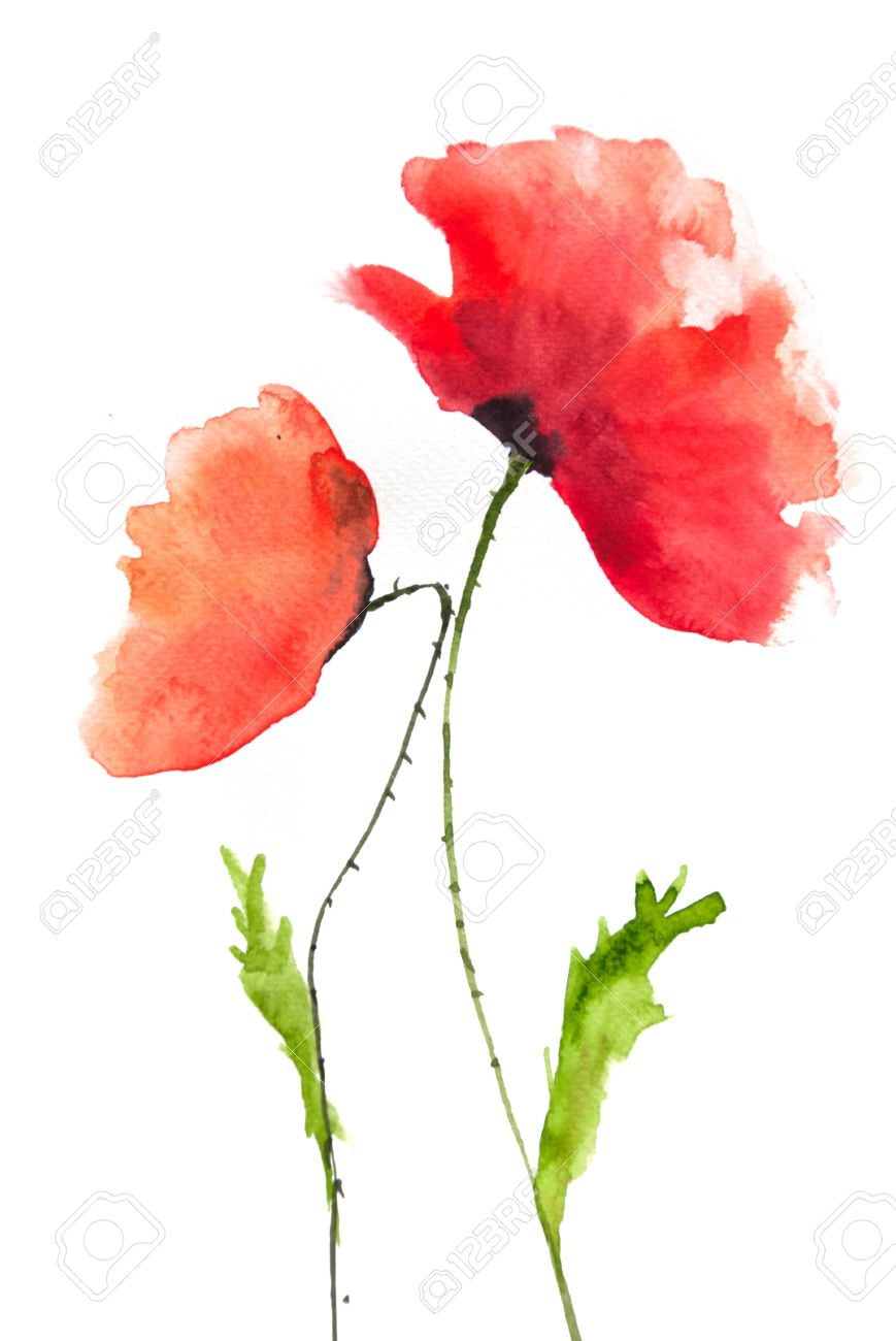 Beautiful Red Poppy Flower Watercolor Painting Stock Photo Picture