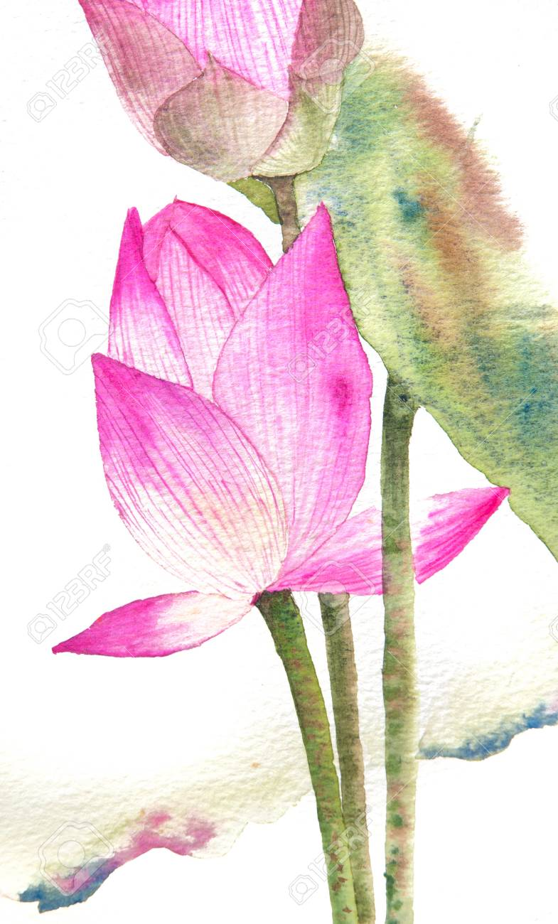 Pink lotus flowers on white watercolor painting stock photo picture pink lotus flowers on white watercolor painting stock photo 62820943 mightylinksfo