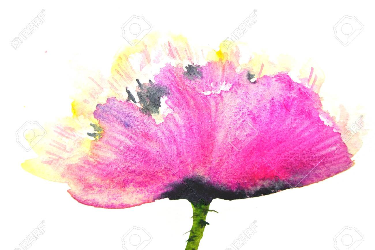 Deep Pink Poppy Flower On White Watercolor Painting Stock Photo