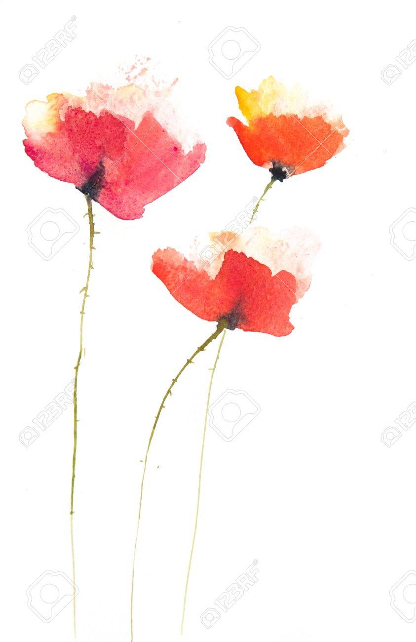 Poppy Flowers Paintingwatercolor Painting Stock Photo Picture And