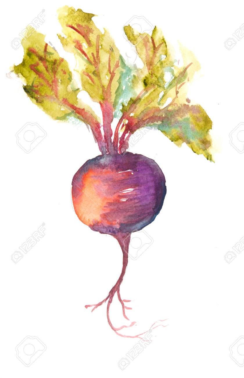 Rote-Bete-Kunst, Aquarell Gemüse Malerei Lizenzfreie Fotos, Bilder ...