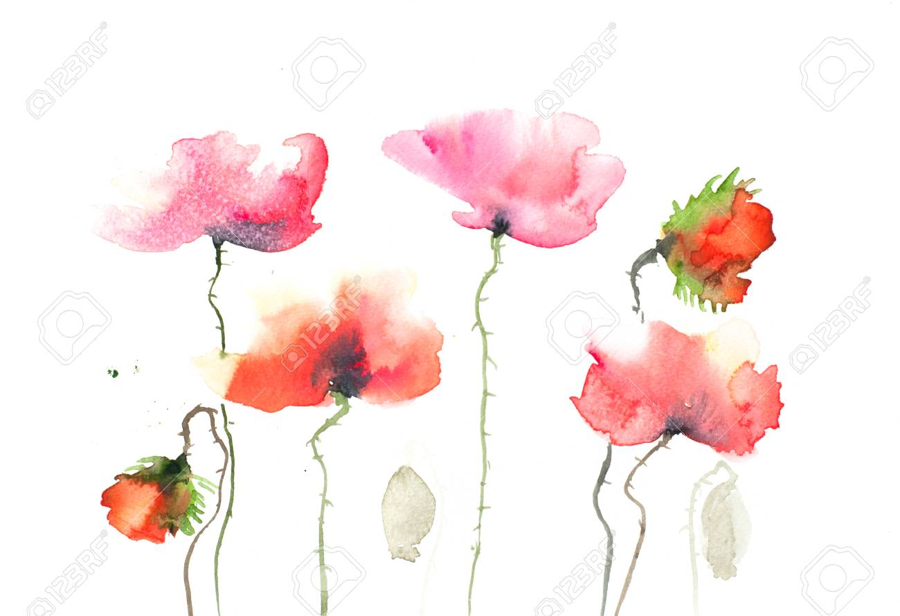Abstract Poppy Flowers Painting On White Stock Photo Picture And